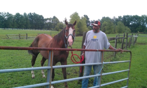 Mel Daniels with his beloved horses.